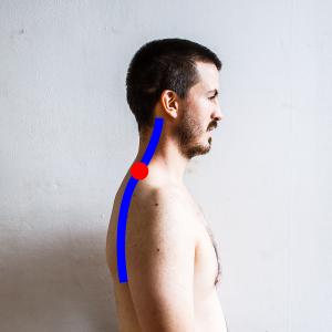 posture cou charniere segments