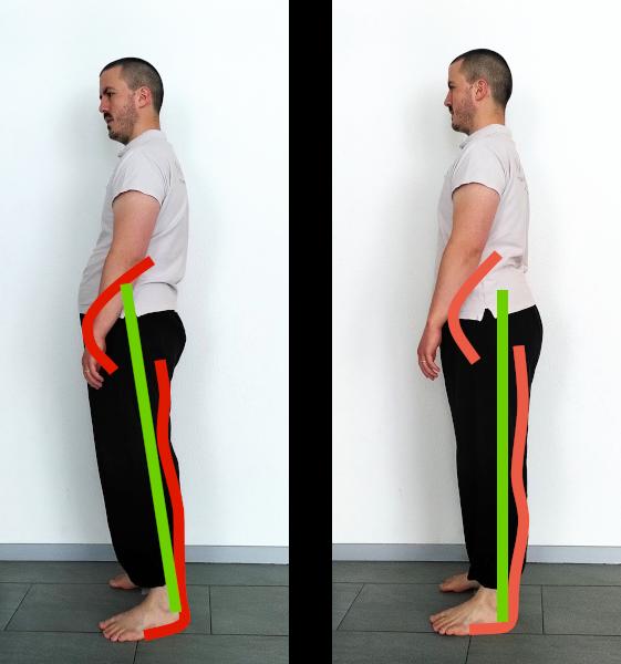 posture debout schéma musculaire